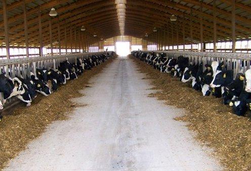 искали: проект фермы на 50 гол